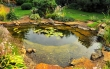 Pond Maintenance To Prepare For Summer