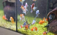 How Do You Know If You're Overfeeding Your Fish?