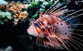 11 of the Most Beautiful Marine Fish to keep