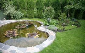 How to set up a pond and things to think about before starting