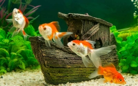 Setting up your first Goldfish Tank