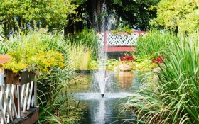 Love Your Pond This Summer
