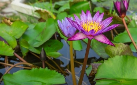 When should I start planting in my pond?