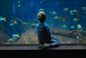 Health Benefits Of Owning A Fish Tank