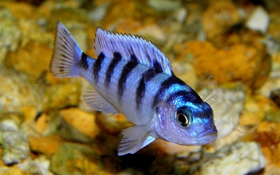 Caring for Your Fish While on Holiday