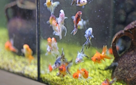 How Often Should You Clean Your Fish Tank?