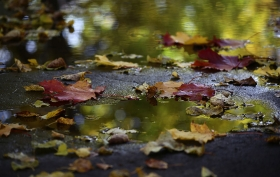 8 Pond Products You Need for the Changing Seasons