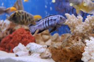 What's on the Menu? Finding the Perfect Food for Your Fish
