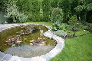 Where Can I Buy Pond Plant Baskets?
