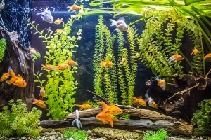 Getting the Best Results from Your Aquarium Filter