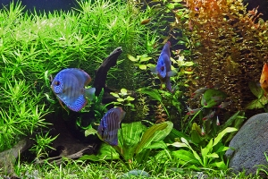 4 Ways to Create a Calm Aquarium
