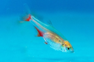 5 Fish That Make the Perfect First Pet