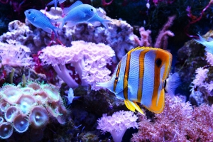 Useful Guide For Marine Fish Tank Water Treatment