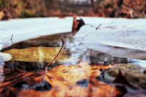 Top Tips On How To Prepare Your Pond For Winter