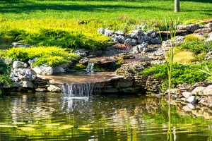 A Stress Free Guide to Fish Pond Maintenance