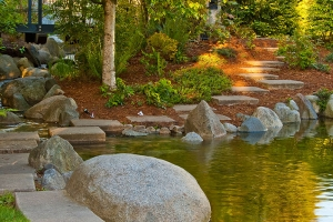 How to Make Your Freshwater Pond a Sustainable Habitat