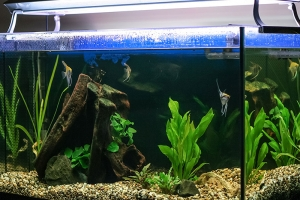 How Do I Clean My Aquarium?