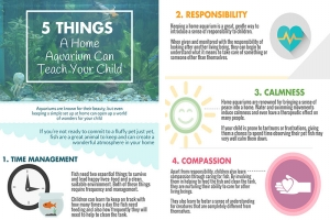 The Benefits Of An Aquarium For A Child