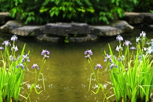 Pond Essentials You Need Before Spring Arrives