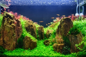Where Should I Place My Fish Tank?