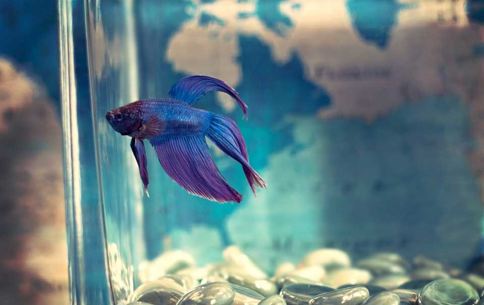 How To Stop Fish From Jumping Out Of Tank