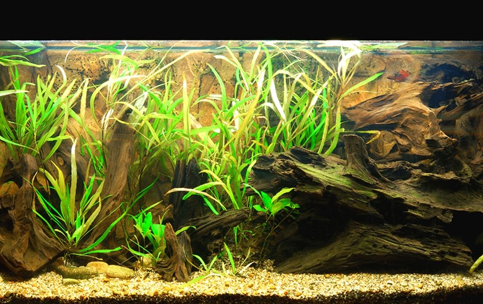 Pass the Salt Please : Setting Up Your New Brackish Tank