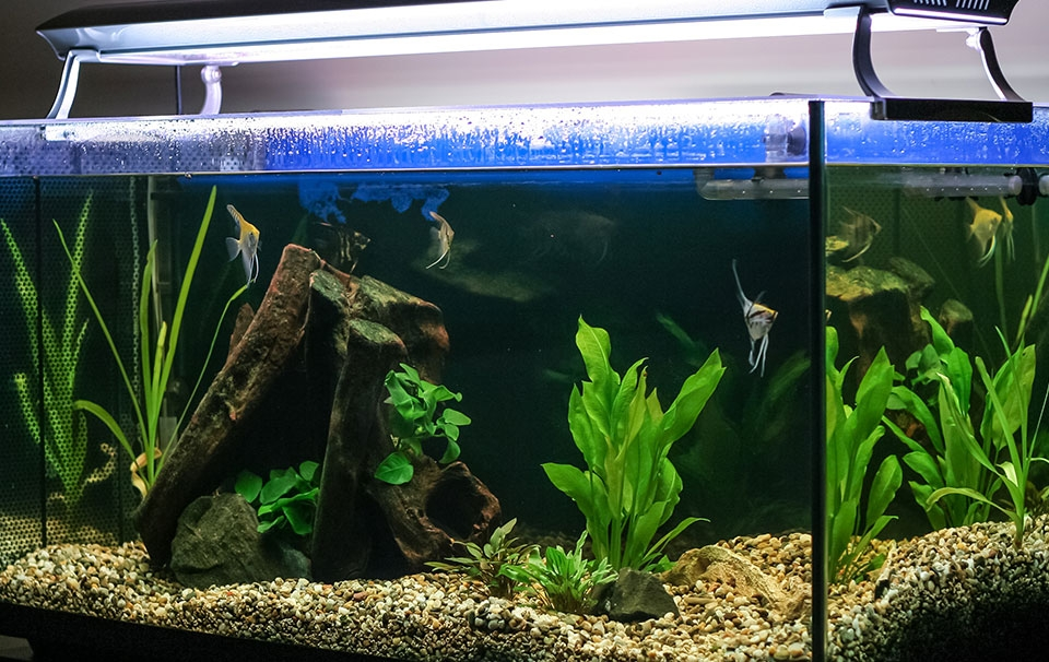 Fish Tank Setup Guide