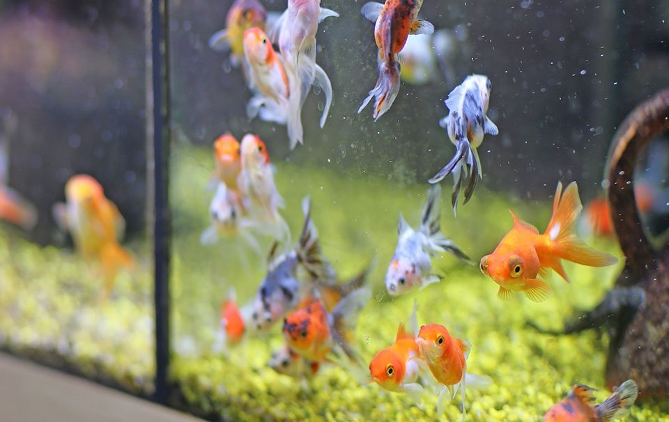 Fish Tank Cleaning Guide Advice