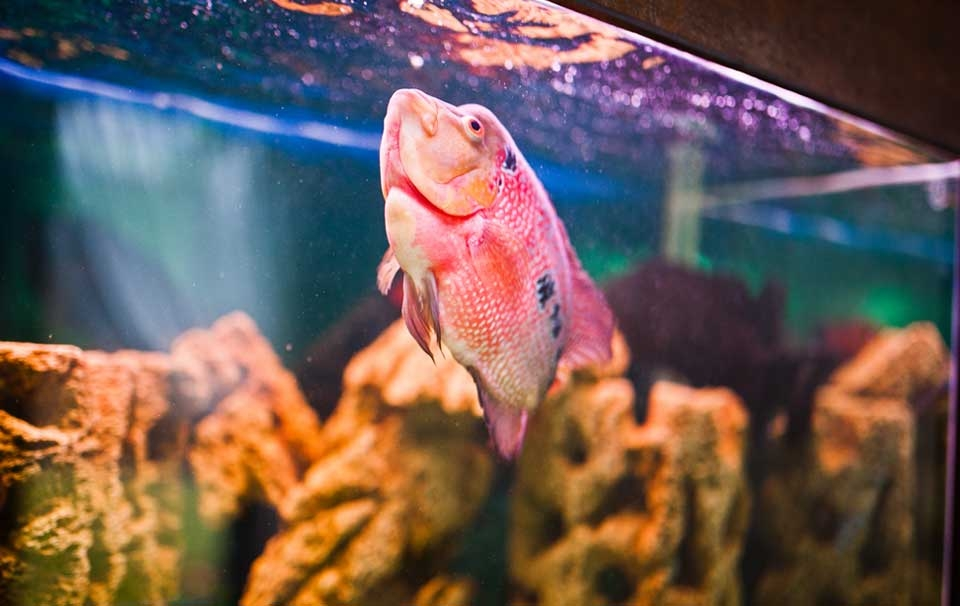 Which food is the best for my fish?