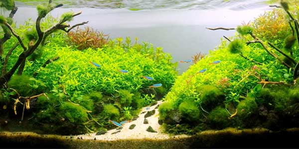 A Guide to Aquascaping And Aquarium Design